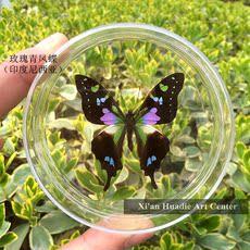 Импорт бабочки: розово-зеленый Махаон, отличный цвет.