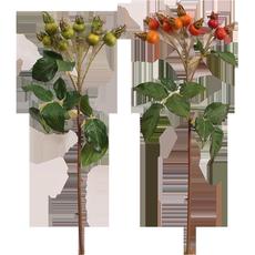 Засушенные цветы Oak Manor