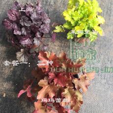 Горшечные цветы, растения