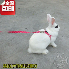 Rope walks the rabbit 1.2M